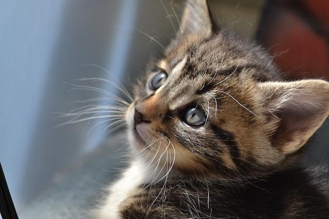 kidney friendly cat food