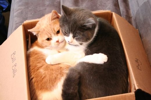 Two cats in a cardboard box