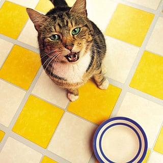 What Foods Are Poisonous To Cats?