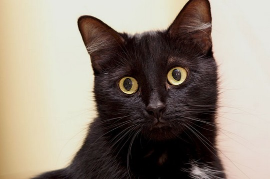 Black And White Cat Name Ideas