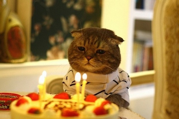 A Gallery of Cats and Kittens Celebrating Birthdays