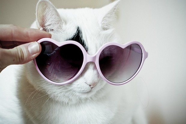 A Gallery of Cats Wearing Sunglasses