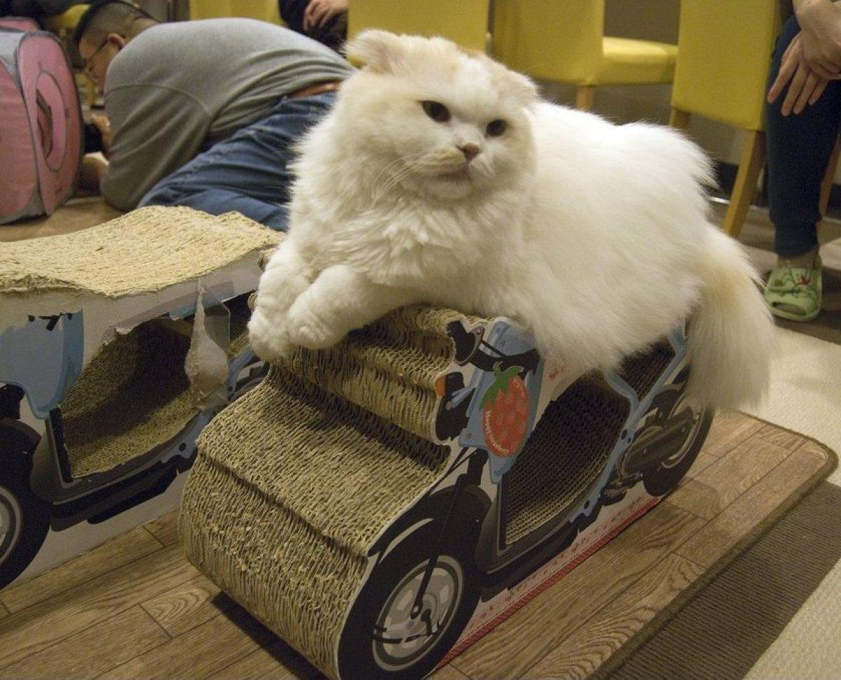 Seven Crazy Destinations for Cat Lovers