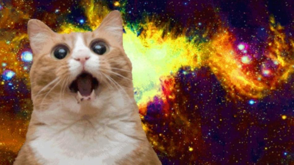 The Funniest Types of Cat Memes Over the Years