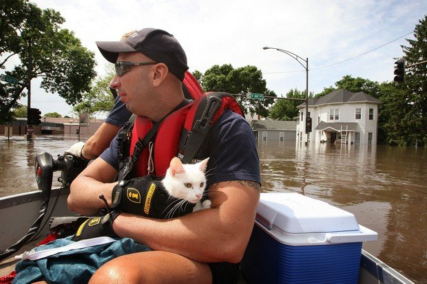 15 Great Pictures of Cats Saved by Firemen