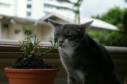 15 Poisonous Plants To Keep Your Cat Away From