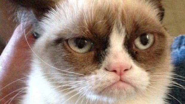 10 of the Funniest Grumpy Cat Memes