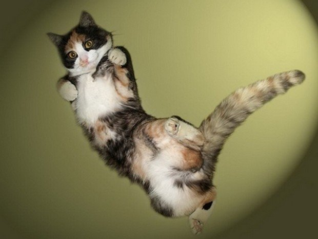 Cat Jumps On Back