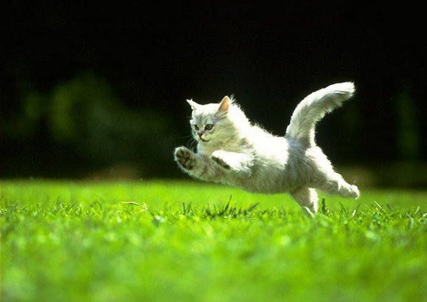 An Awesome Gallery of Jumping Cats