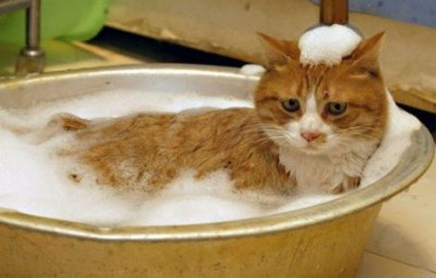 Another Great Collection of Cats in the Tub