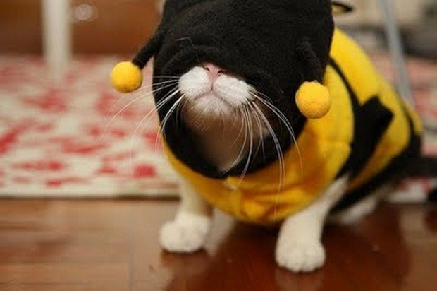 & A Gallery of Cats Wearing Bee Costumes