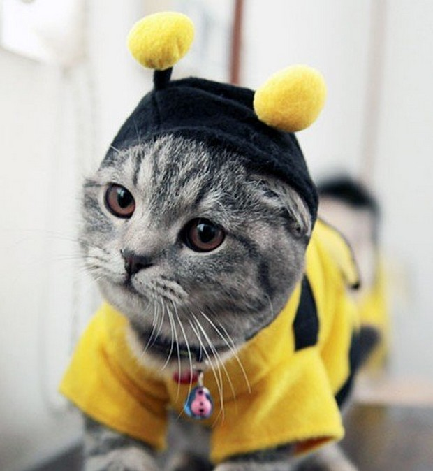 A Gallery of Cats Wearing Bee Costumes