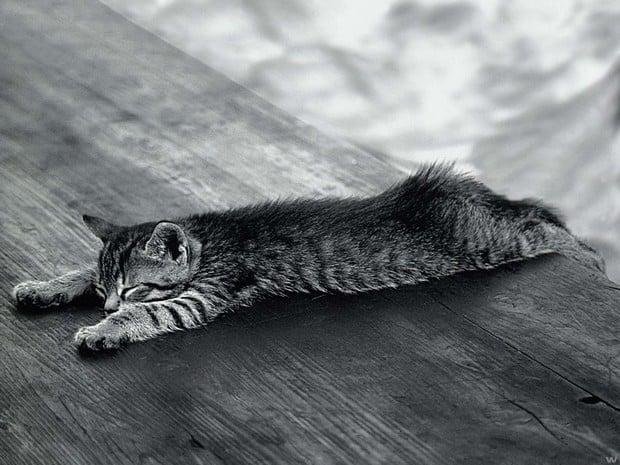 Ten Cats Who Sleep in Strange Places