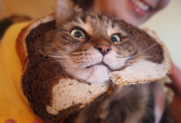 """A Funny Gallery of """"Breaded"""" Cats"""