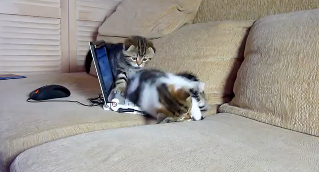 Cat Video of the Day:  Kittens Show us How to Hack a Computer