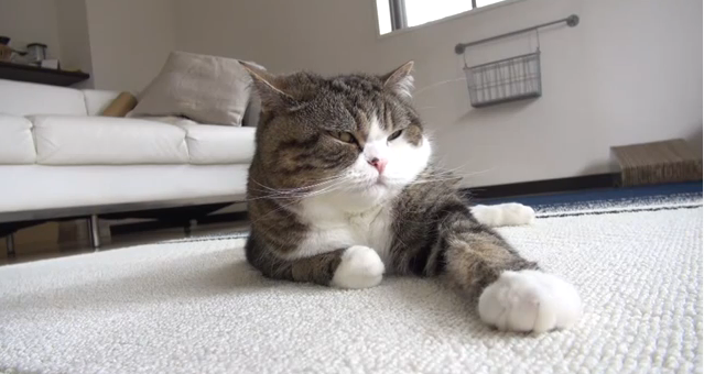Cat Video of the Day:  Maru is a Master at the Art of Sleeping