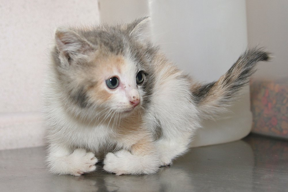 10 Tips on Selecting a Cat That's Right For You