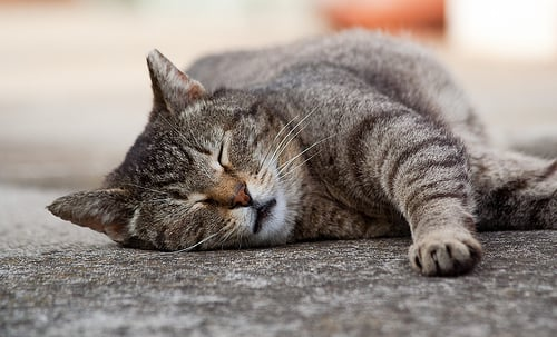12 of the Most Common Health Problems in Older Cats