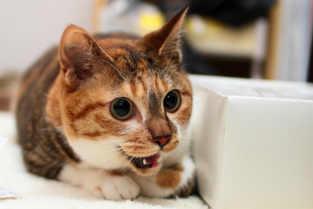 Eight Reasons Why Cats Dominate The Internet