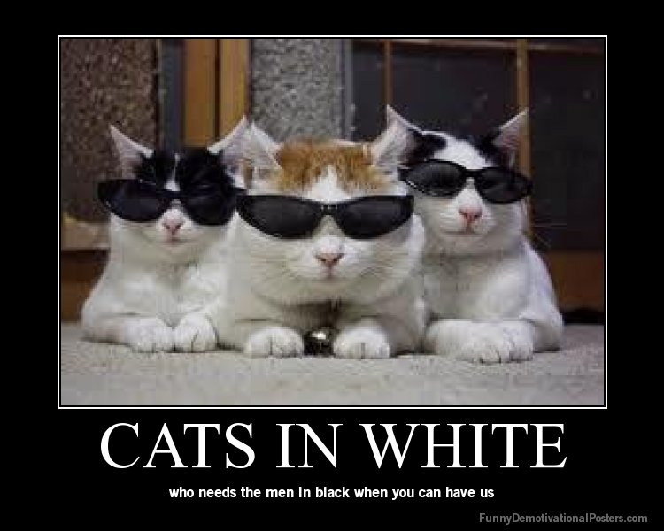 Funny Cat Demotivational Pictures