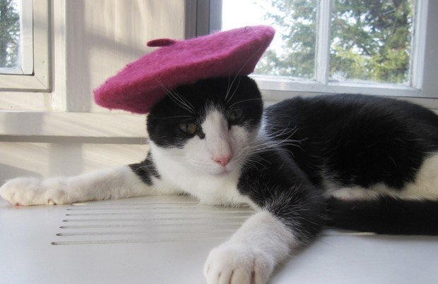 An Adorable Gallery of Cats Wearing Hats