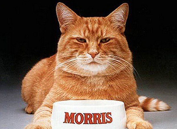 18 Famous Cats In Our Pop Culture