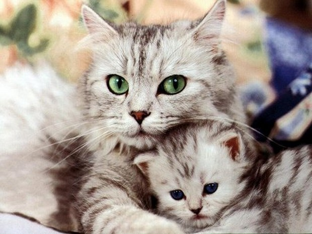 An Adorable Gallery of Hugging Cats