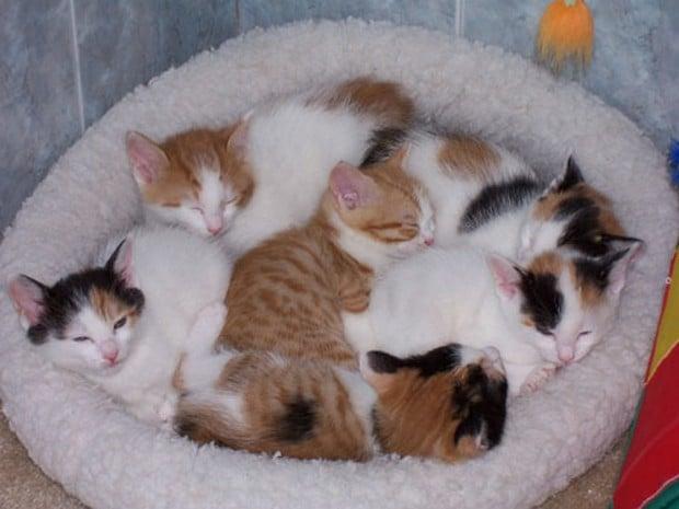 light orange kitten