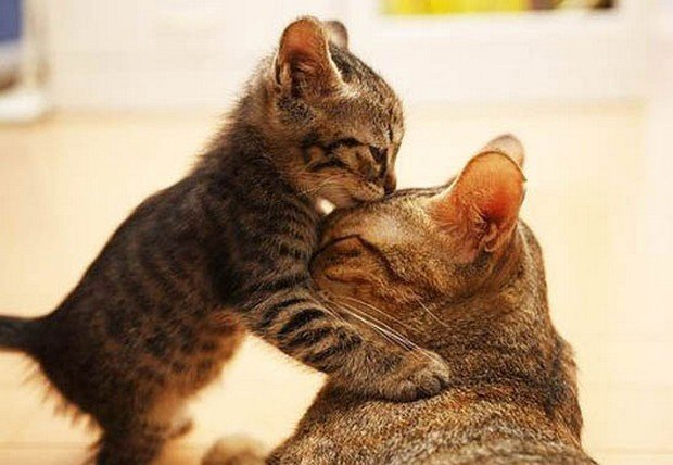 An Adorable Gallery of Kissing Cats