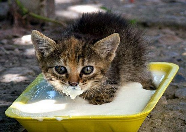 A Gallery of Cats with Milk on Their Faces