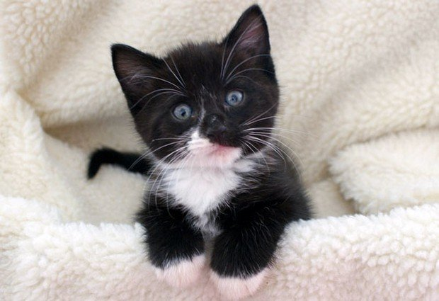 Common Cat Breeds Black And White