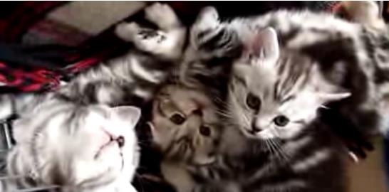 Cat Video of the Day:  A Very Sweet Awkward Sleeping Kitten