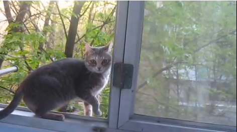 Cat Video of the Day:  Cat Communicates with Birds