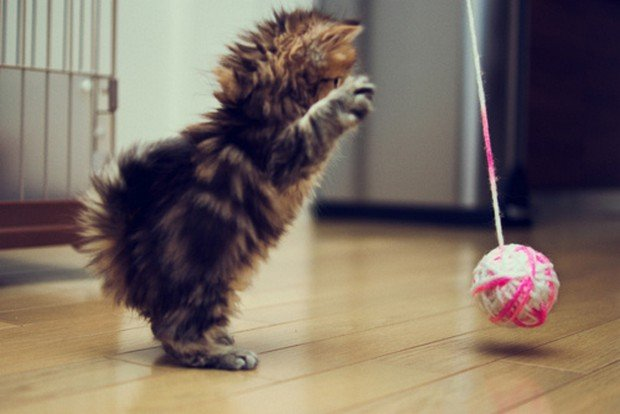 A Gallery of Cats on Their Hind Legs
