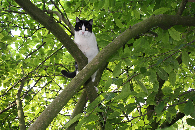 nyc cop tries to save cat from tree fire department has to save cop. Black Bedroom Furniture Sets. Home Design Ideas