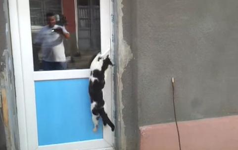 Cat Video of the Day:  Cat Jumps to Open the Door