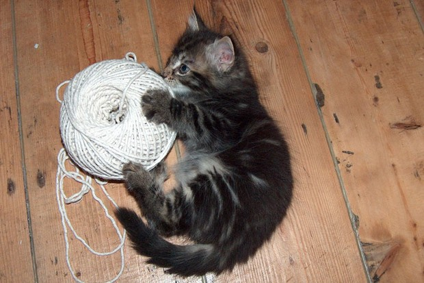 A Gallery of Cats Playing with String