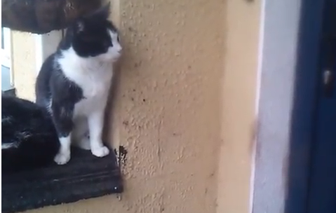 Cat Video of the Day:  Very Clever Kitty Opens the Door