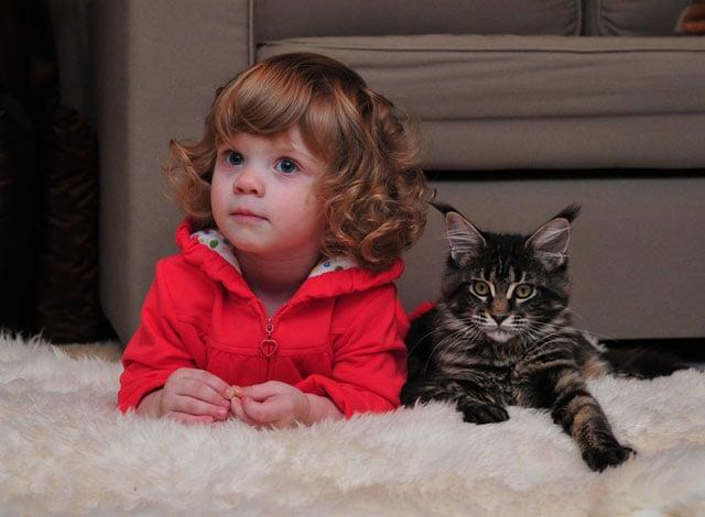 10 Funny Similarities Between Cats and Children