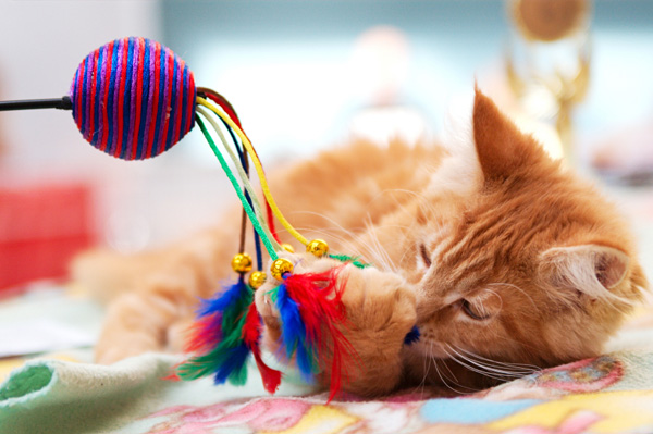 11 Awesome Toys for Your Cat that Are Nearly Free