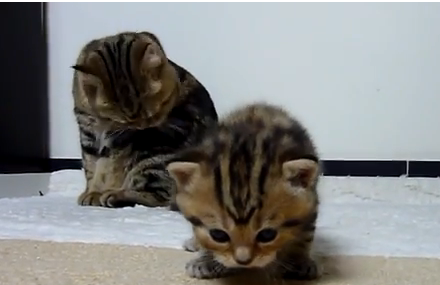 Cat Video of the Day:  Adorable Kittens Are Curious