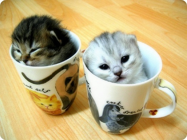 A Gallery of Kittens in Cups