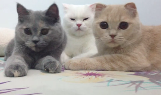 Cat Video of the Day:  Cats Move in Rhythm to Beat