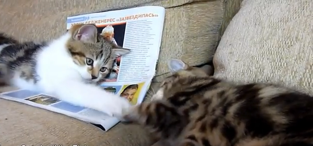 Cat Video of the Day:  Cute Kittens Playing Hand Slap