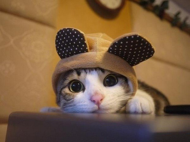 A Fun Gallery of Cat Cosplay Part 2