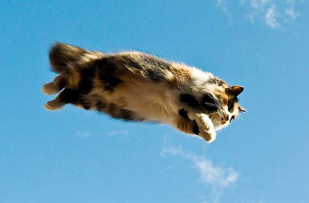 A Fun Gallery of Flying Cats