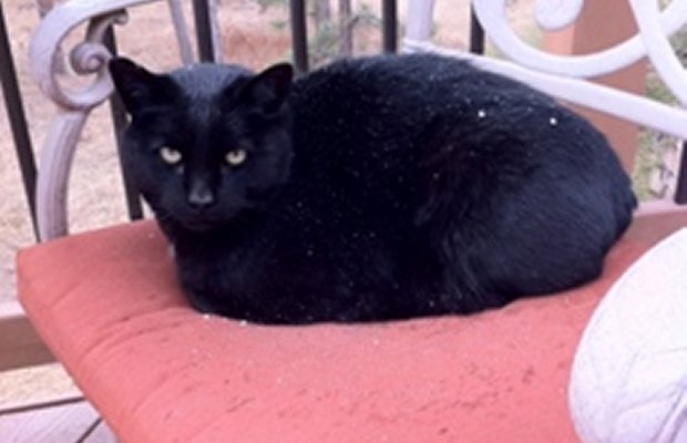 Cat that was Lost in a Fire is Returned to Its Owners