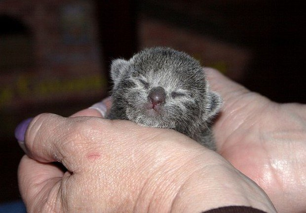 A Gallery of Tiny Cats in Human Hands