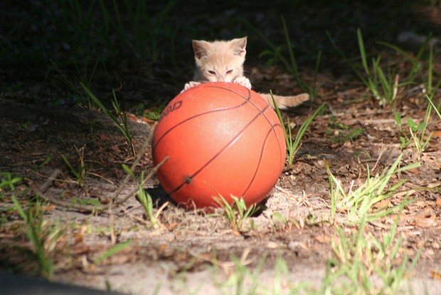 A Gallery of Cats Who Love Basketball