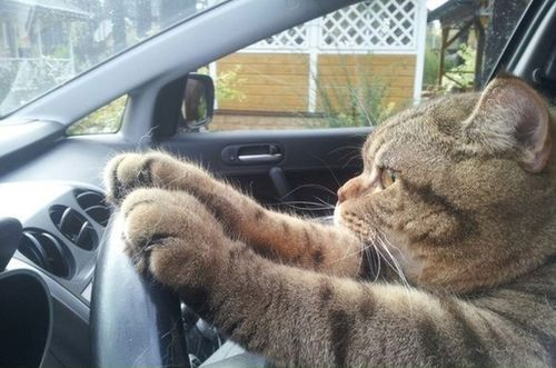 Cat Tip of the Day:  Keep Your Volume Down While Driving